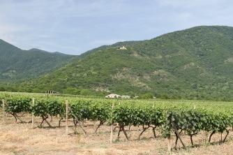 Vineyards, Georgia