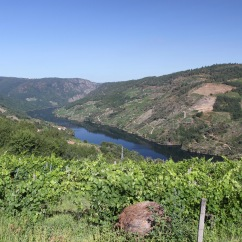 Vineyards and the River Sil, Ribeira Sacra, Galicia, Spain