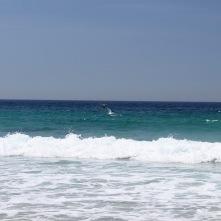 Dolphins, Playa de Lariño, Costa da Morte, Galicia, Spain