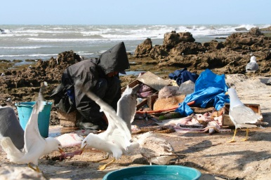 Fisherman, Essaouira, Morocco