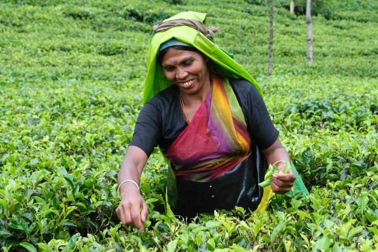 Blue Field Tea Plantation, Ramboda, Sri Lanka