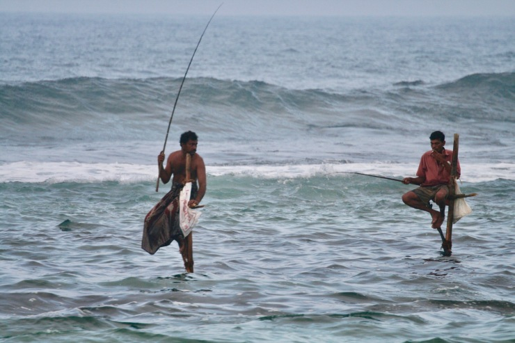Traditional Stilt Fishing in Sri Lanka