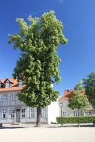 Domplatz, Halberstadt, Germany